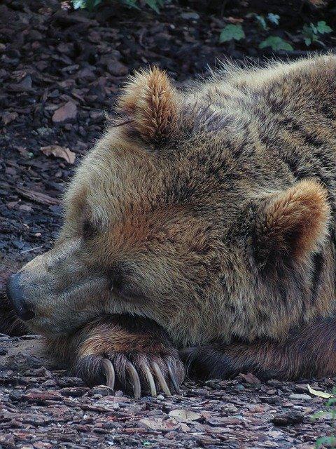 Winterslaap dieren