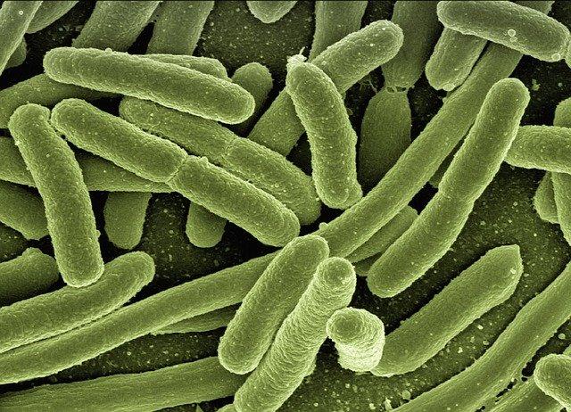 Bacterien hebben een lagere mutatiesnelheid dan virussen