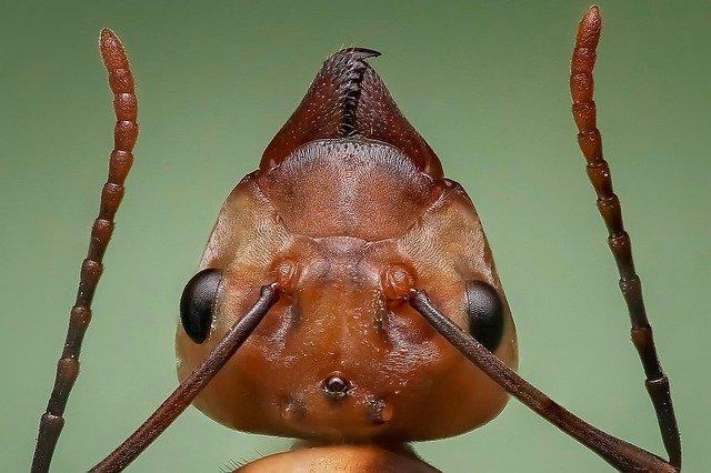 Muteer jij sneller dan een mier?