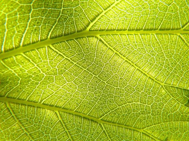 Fotosynthese is een voorbeeld van kwantumbiologie