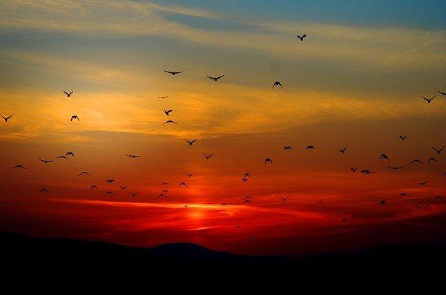 Vogels navigeren met behulp van verstrengeling